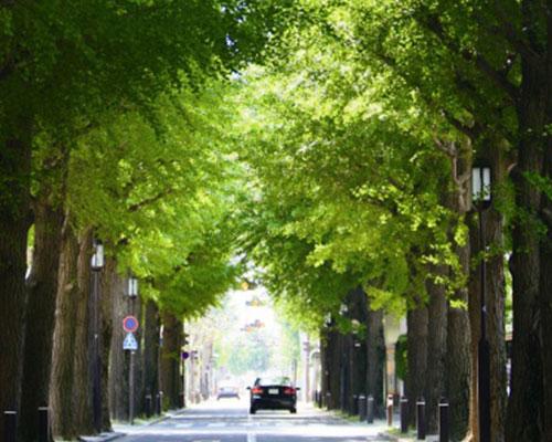 成城の高級住宅街
